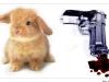 Bunny vs. Gun