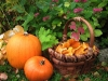 A basket full of Autumn