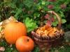 A basket full of Autumn