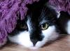Gizmo under a rug